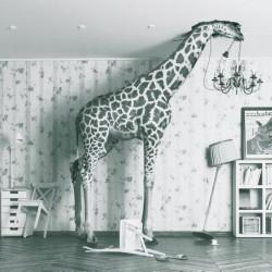 Toile Girafe