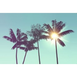 Affiche Premium Palmiers